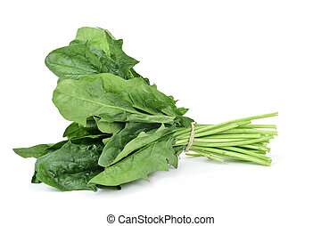 bunch of spinach - closeup of a bunch of spinach on a white...