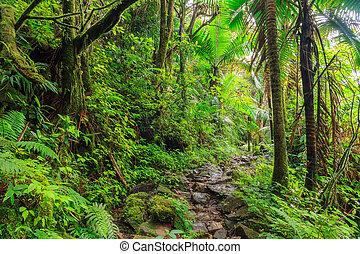 National park El Yunque