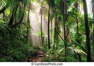 El Yunque morning mist