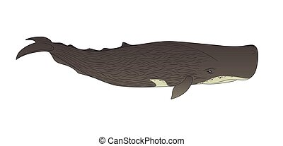 Cachalot or sperm whale on a white background. Vector...