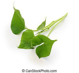 sweet potato leaves greens - sweet potato leaves on white...