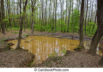 Wallow in the forest - Small water puddle in the forest...