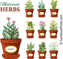 Medical Herbs In Pots With Labels - Set of medical herbs in...