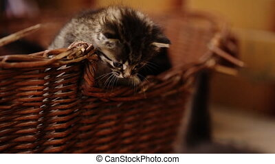 Three kittens jumping from basket.