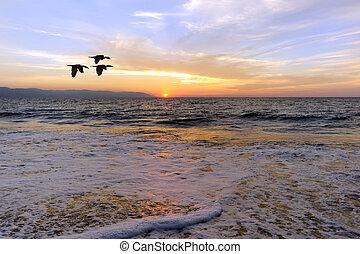 oceânicos, pôr do sol, Pássaros, silueta,...