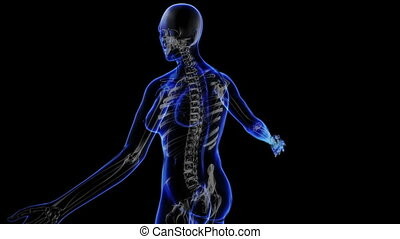 Female skeleton - Transition body - female skeleton - body...