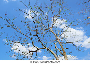 tree branches and blue sky pattern background