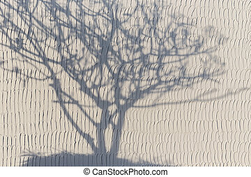 Shadow of tree whiteout on the white wall - Abstract shadow...