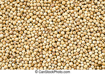 Organic Dried coriander seeds Coriandrum sativum - Organic...