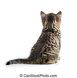 Cat back view. Kitten sitting isolated on white. - Cat back...