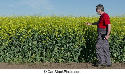 Farmer examine rape seed field