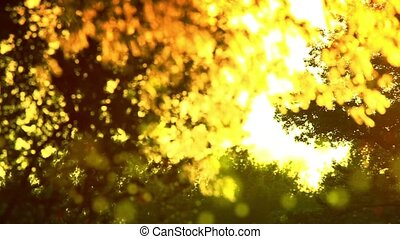 Pollen and tree leaves on the wind in sunset