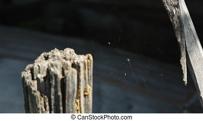 Cobweb closeup, beautiful spiders web in the sun shine