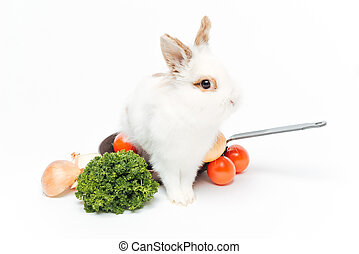 Rabbit inside a frying pan isolated on a white background