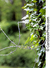 barbed wire and nature. opposites - a barbed wire for leaves...