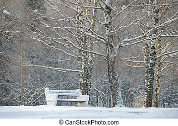Benches covered with snow in winter park