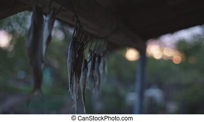 salted fish hanging dried - salted fish hanging getting dry...