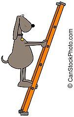 Dog climbing a ladder