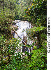 View on waterfall in Cameron highlands - Beautiful waterfall...