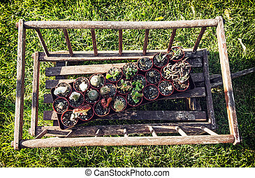 Old decorative wooden cart with various planted cacti in the...