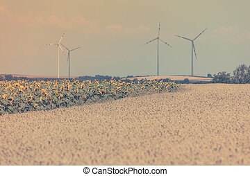 Cereal and Sunflowers Fields view Filtered shot with a...