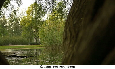 A peaceful garden scene, bushes, trees and a quiet water...