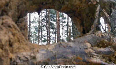 View through tree stump, 4k