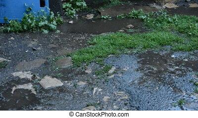verano, Lluvia, en, el, patio,