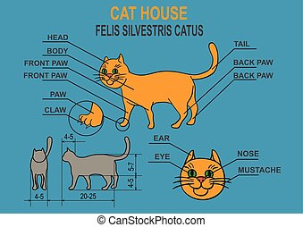 Cat ordinary home. Infographics. - Cat home. Schematic...