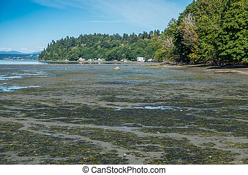 Low Tide At Dash Point