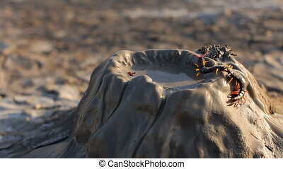 Small Centipede On Mud Volcano - CLOSE UP SHOT In the frame...