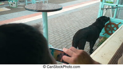 Man with cell phone taking picture of stray dog - Man using...