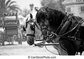 Two horses - View of two horses watching the camera on the...