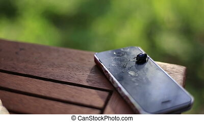 Black beetle crawling on the battered phone close up. Green...