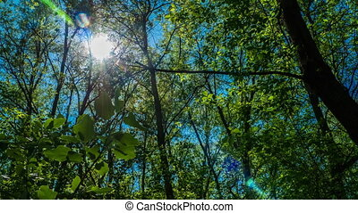 timelapse the sun shines through the leaves of the trees in...