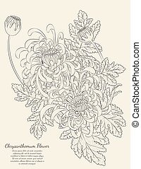 Chrysanthemum Flower from hand drawing