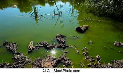 Green Dirty Lake At Sunny Day - Shot captured at bright...