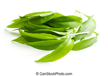 Fresh ramsons leaves Wild garlic leaves isolated on white...