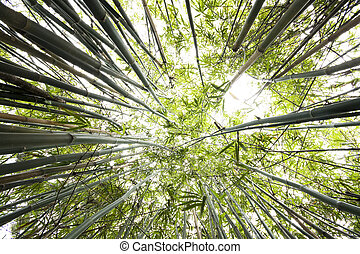 Green Bamboo Forest for background