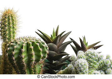 Bunch of cactus - Closeup to different sorts of cactus...