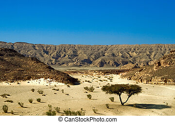 dry desert in red sea region, sinai, egypt