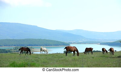 Herd Of Horses Grazing In Mountain Valley - OVERALL frame...