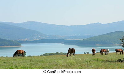 Herd Of Horses Grazing At Mountain Valley - Beautiful...