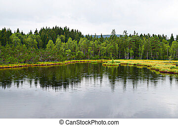 A peat bog in Sumava, Czech Republic