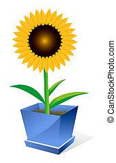 Sunflower spot concept - Beautiful sunflower spot concept...