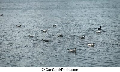 seagulls swaying on the water