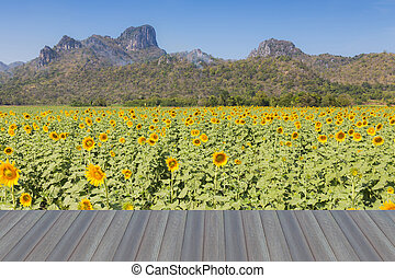 Sunflower full bloom - Opening wooden floor, Mountain...