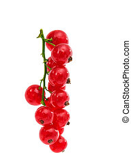 currants isolated on white background