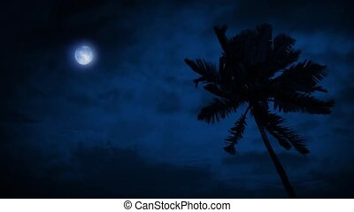 Palm Tree In Breeze With Moon Above - Palm tree in strong...