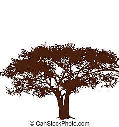 Tree in savanna - tree growing in the savanna, isolated on...